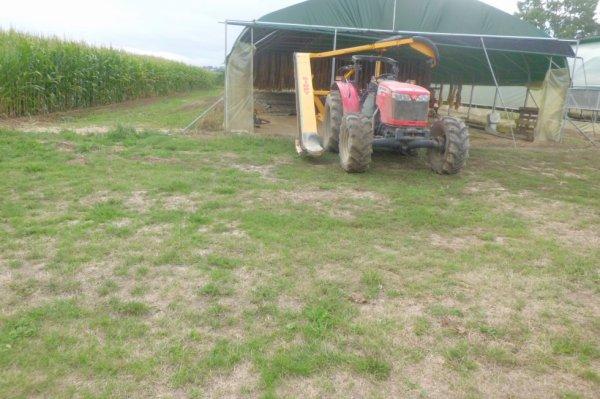 un masey-ferguson 3645 se trainant sa kirpy rmtd s/3 a la fin de récolte du tabac
