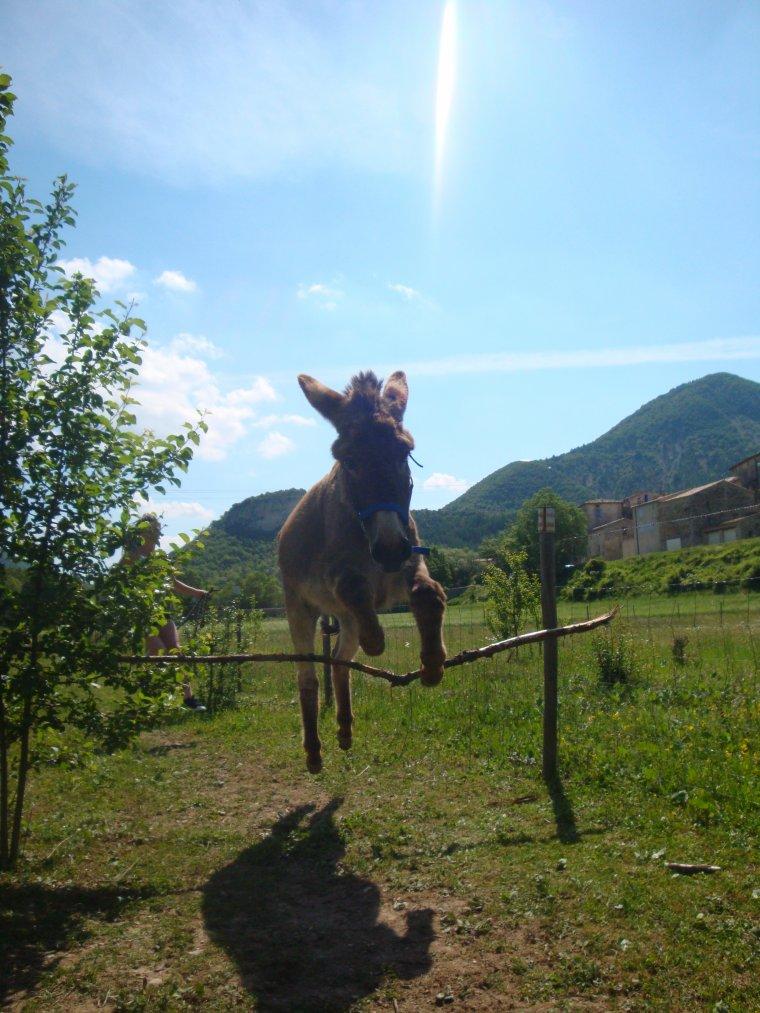 Ce n'est pas un âne que j'ai, c'est le paradis tout entier