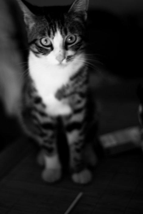 Le Chat.