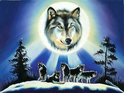 voici quelques photo de loups