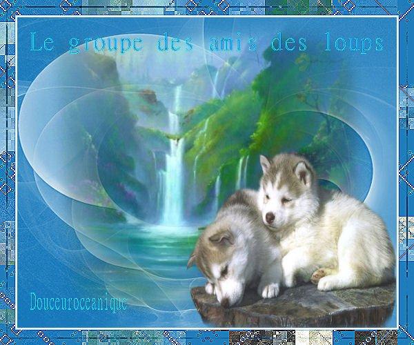 Montage pour le groupe des amis des loups