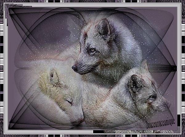 loup magnifique