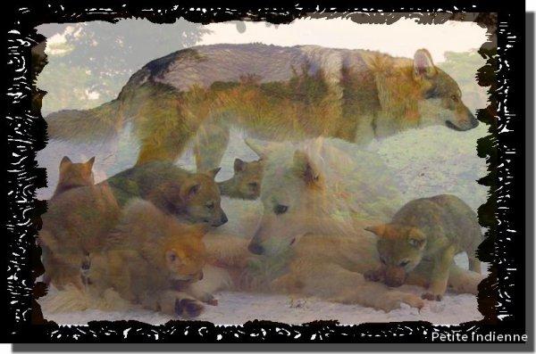 Création de moi ( Famille de loups)