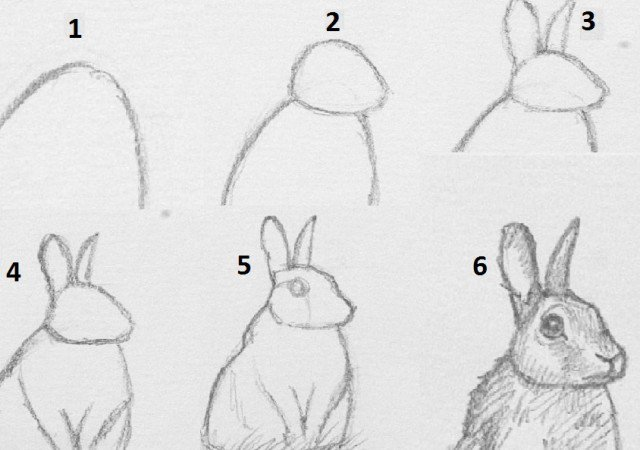 drawing animals how to draw a rabbit occultis studiiss artistic blog