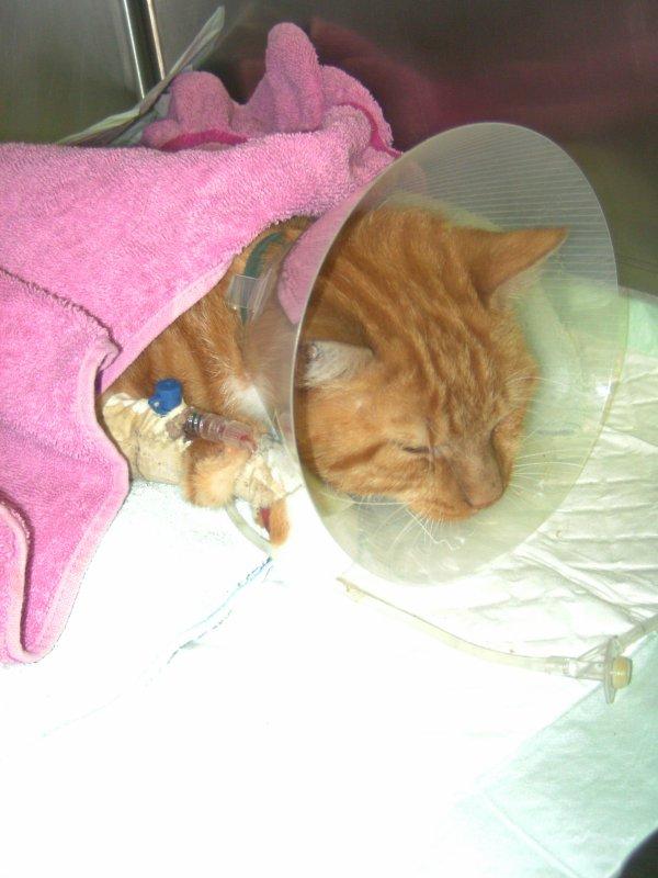 Mon chat qui me manque <3