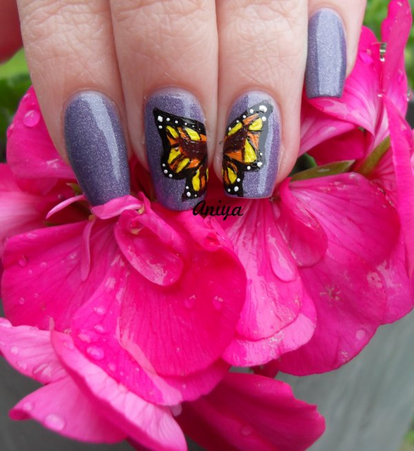 NA Papillon