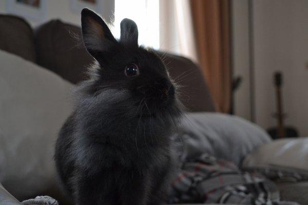 Rejoindre le paradis des lapins si vite devrait-être interdit...