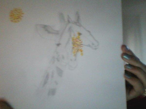 girafe /cheval