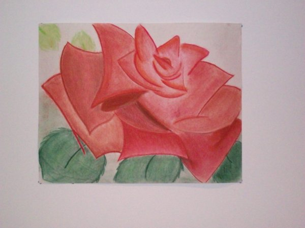 Une rose en grandes dimensions