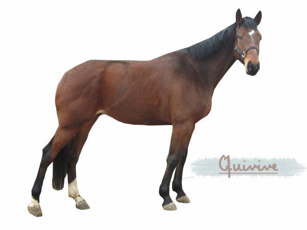 Le cheval ♥