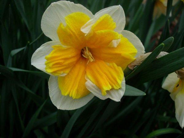 """articles de passion-fleurs-animaux taggés """"symbole du pays de"""