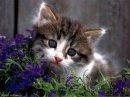 Photo de passion-fleurs-animaux