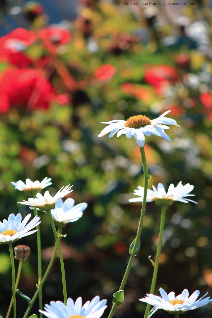 Fleurs Chaleureuses