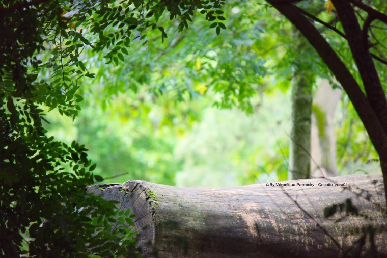 Prommenons-nous dans les bois