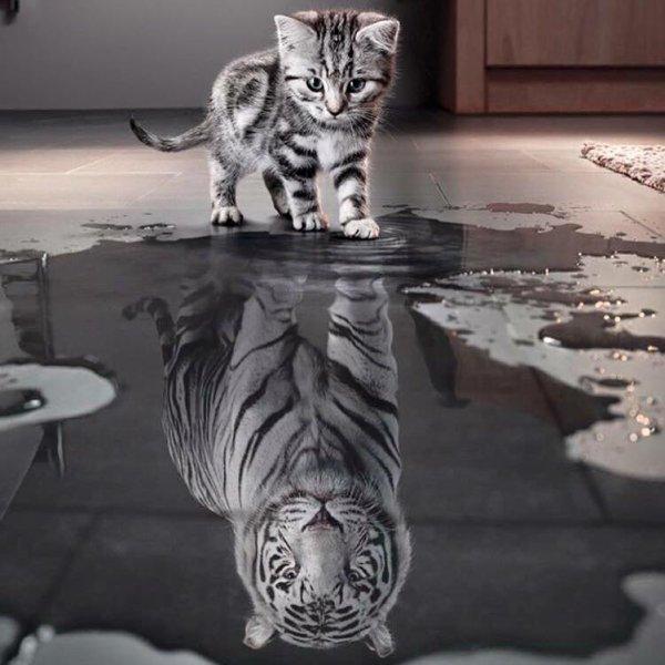 petit chat ;)