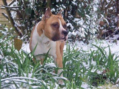 Eros ,neige 2010