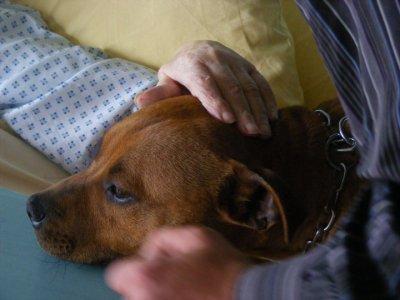 Visite en maison de retraite à Plougastel le mardi 3 mai 2011     (7)