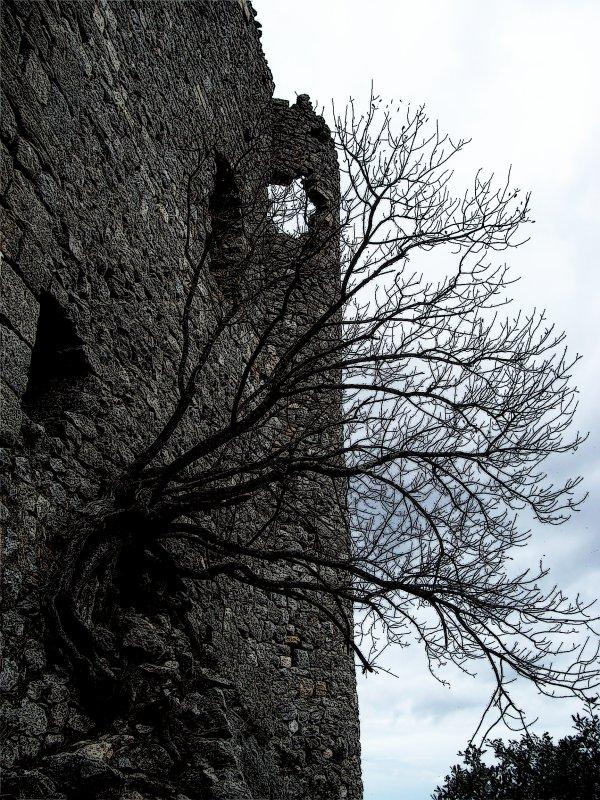 Vieux burg, vieux burg! - Château de Montferrand (34, France). 10/2010