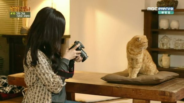 Drama : Coréen Imaginary Cat  8 épisodes[Comédie, Amitié et Romance]