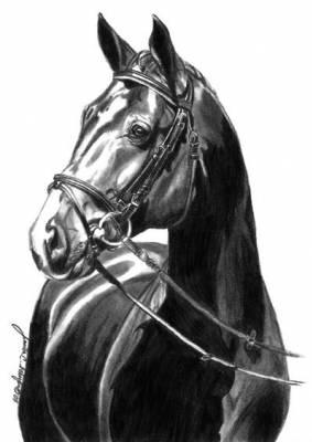 Dessins de chevaux en noir et blanc n 2 le fun avant tout - Chevaux dessins ...