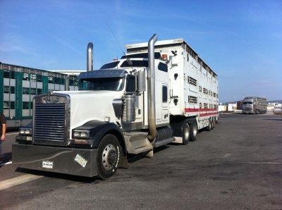 betaillere camion americain transporteur bovins 77. Black Bedroom Furniture Sets. Home Design Ideas