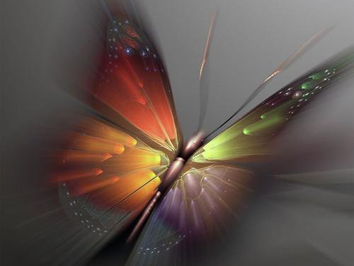 joli ce papillon