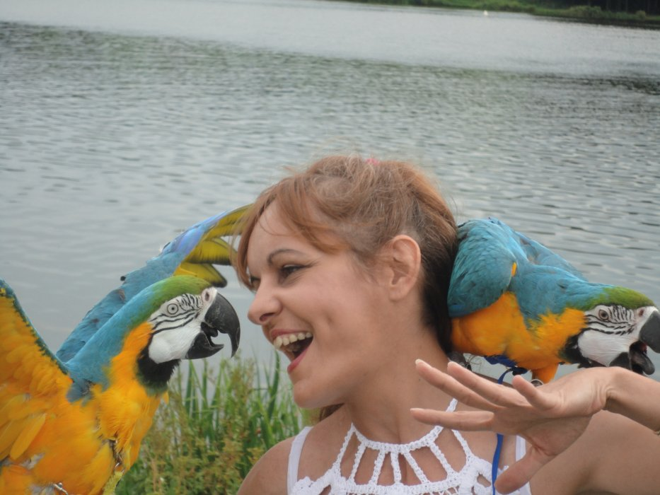 Macaw My Love