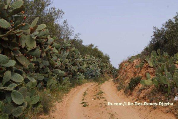 les pistes berberes de djerba