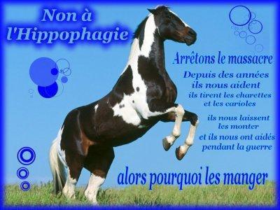 NON A L'ABBATOIR ....