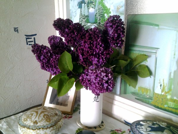 Un peu de lilas ?