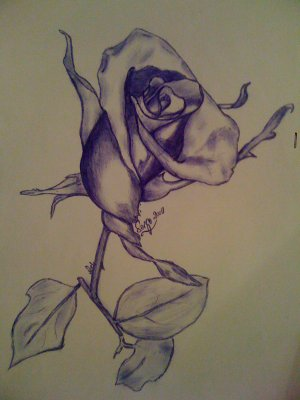 une rose au stylo bic