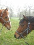 Photo de Bedee-team08-09