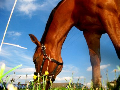 L'équitation est à la fois le Loisir, le sport, l'art et la technique qui consistent à monter et à diriger un cheval. Le mot équitation vient du latin equitare qui signifie aller à cheval.