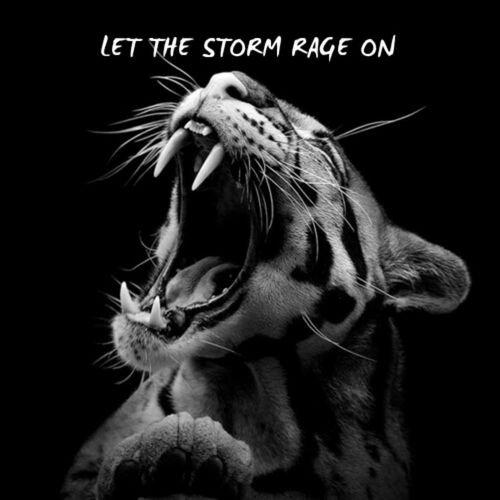 La rage est une saloperie. Elle détruit de l'intérieur et déforme l'extérieur ♥