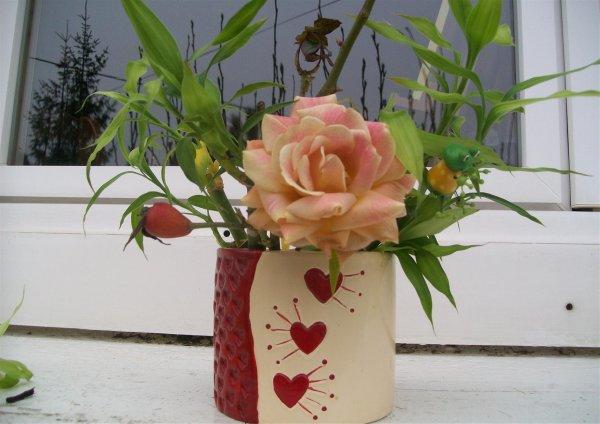 encore une rose dans mon jardin !!