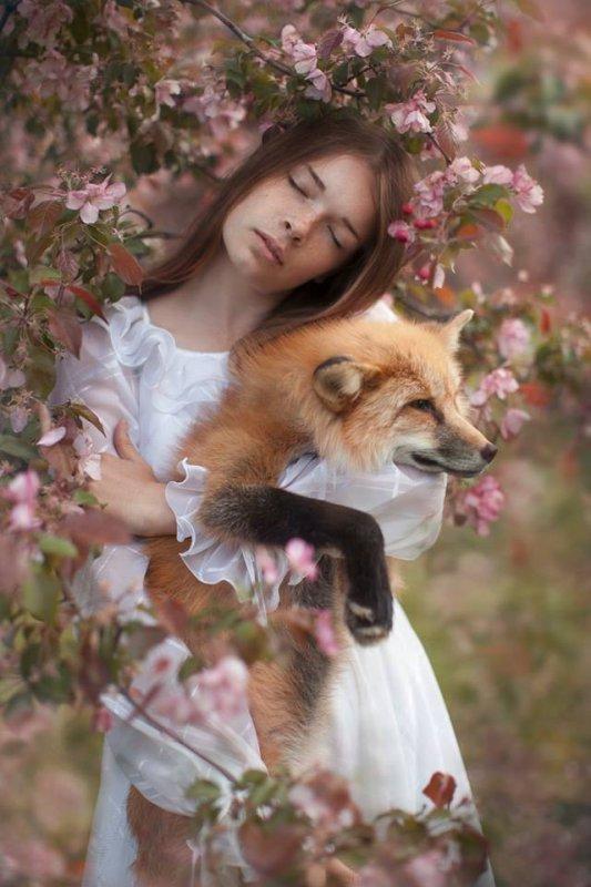 rêve de renard par guillaume vetter