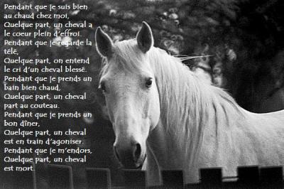 Tout les chevaux meritent la vie ... alors arretez votre massacre :o