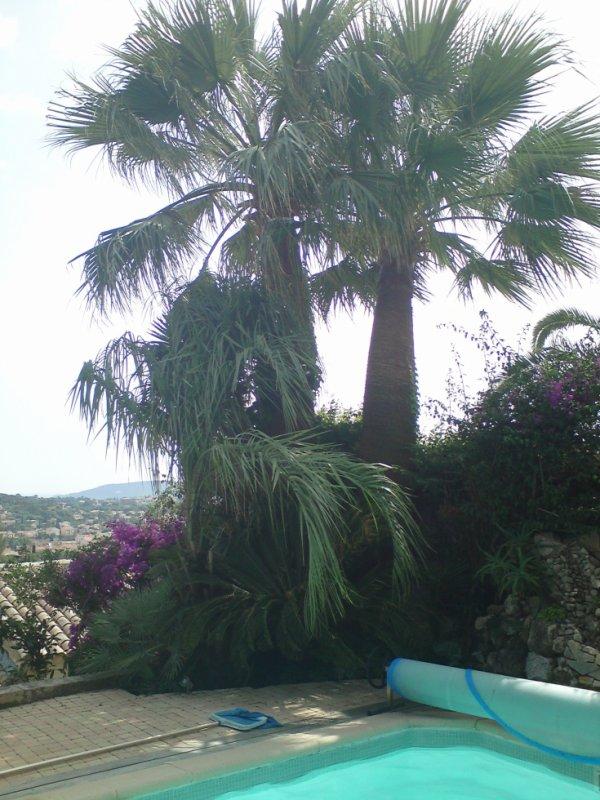 Le jardin d'Howea.
