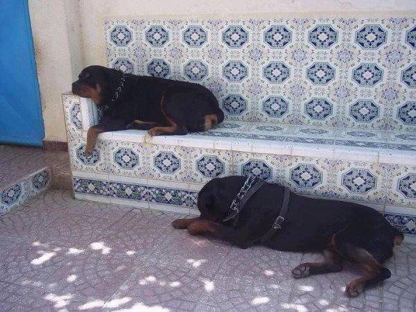 mes chiens  diablo et prince