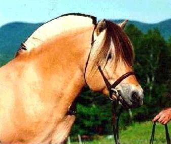 la coupe en brosse a tous les passion s de chevaux je souhaite la. Black Bedroom Furniture Sets. Home Design Ideas