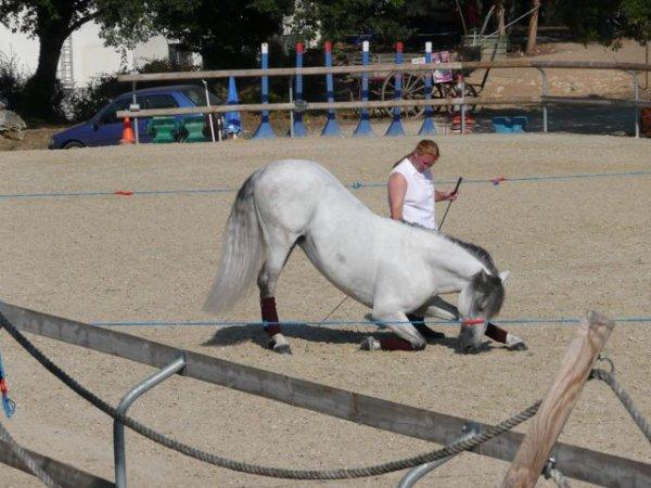 Spectacle - Fête du Cheval 2009 - Vison et Sabrina