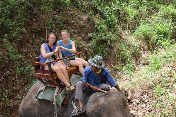 Balade à dos d'éléphant en Thaïlande