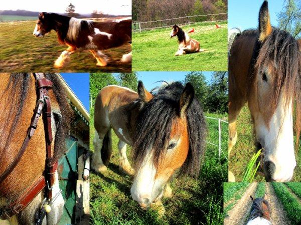 """"""" Le cheval enseigne à l'homme la maîtrise de soi, et la faculté de s'introduire dans les pensées et les sensations d'un autre être vivant """""""