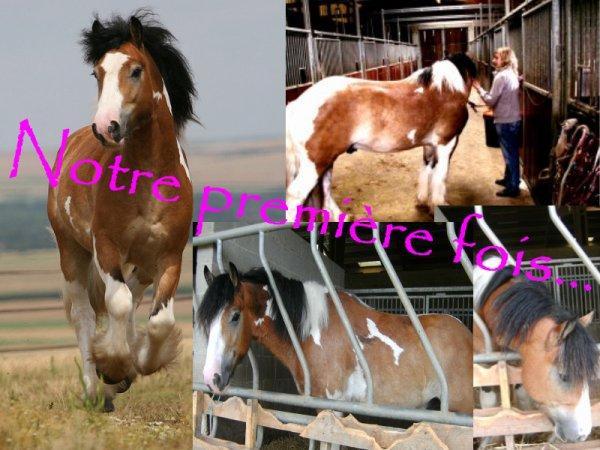 """"""" La vue de ce petit cheval m'impressionna d'une manière que je ne puis très bien expliquer. Il était plus qu'exceptionnellement fort, rapide et superbe dans sa façon de se mouvoir, il me faisait rêver """""""