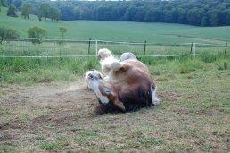 """"""" On oublie parfois que le cheval est un être qui a des sentiments et des désirs, que c'est une bête qui est sensée être sauvage, peut être dangereuse et brutale lorsque l'on fait le moindre pas vers elle, qui devrait s'enfuir sans réfléchir dès la moindre présence d'un humain, mais cet être fabuleux a accepté que l'on monte sur son dos, et qu'elle nous fasse découvrir les plaisirs de la liberté qui ne serait pas connue sans le cheval """""""