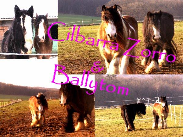 """"""" L'amitié d'un cheval n'a pas de prix car celle-ci est infinie """""""