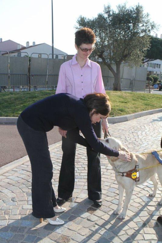 Photos: Notre Marraine, Chien guides d'aveugles.