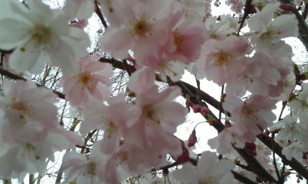Le temps du printemps