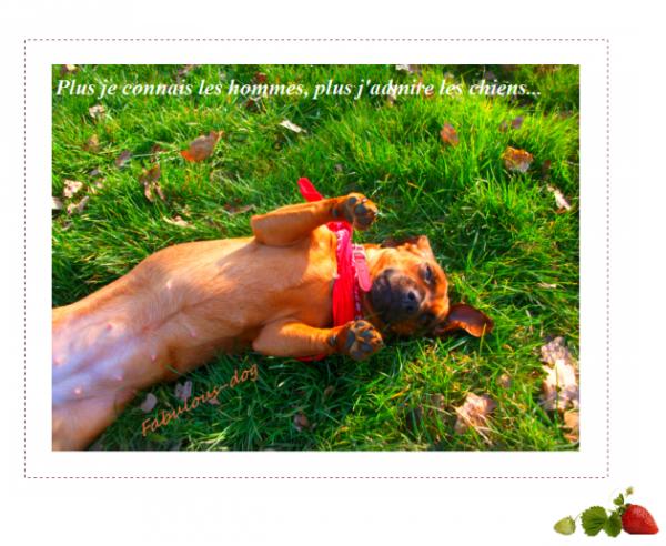 """""""Les chiens n'ont qu'un défaut : ils croient aux hommes."""""""