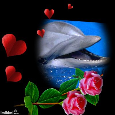 dauphin mon reve
